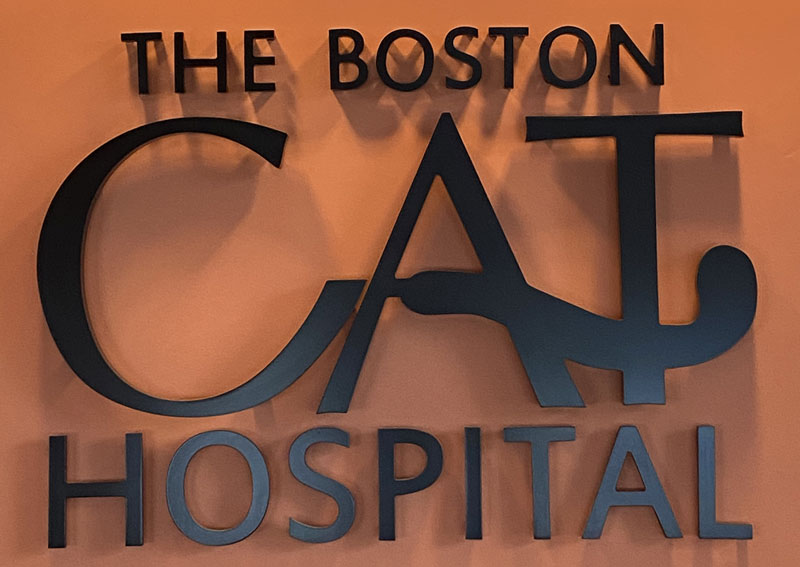 Boston Cat Hospital